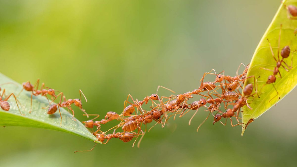Positive Attitude for Work, Philosophy of an Ant